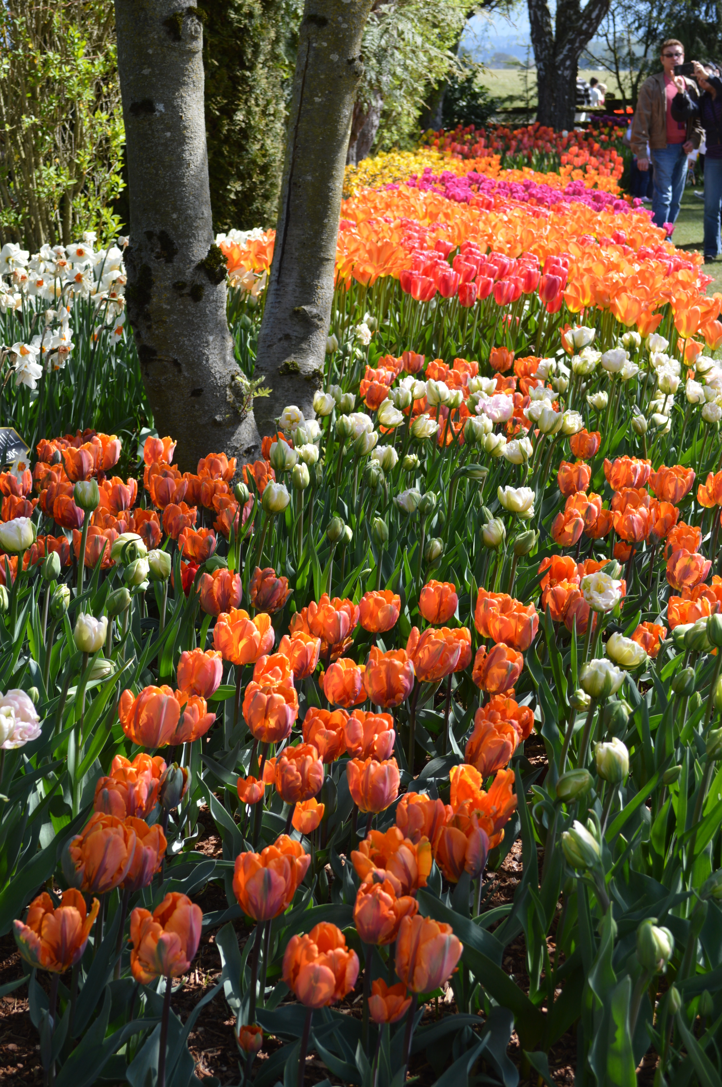 Now that's a colorful flower bed...