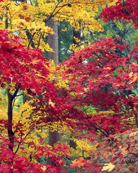 Seattle in the fall...via pinterest