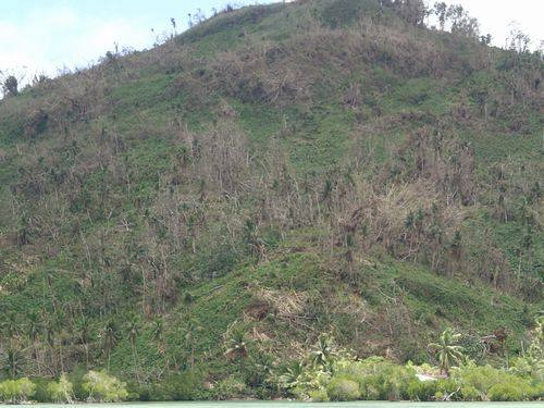 Most trees throughout the islands have been destroyed by Maysak's strong winds. (photo by: Takayuki Suenaga)