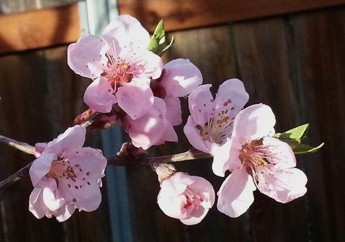 nectarine.jpg