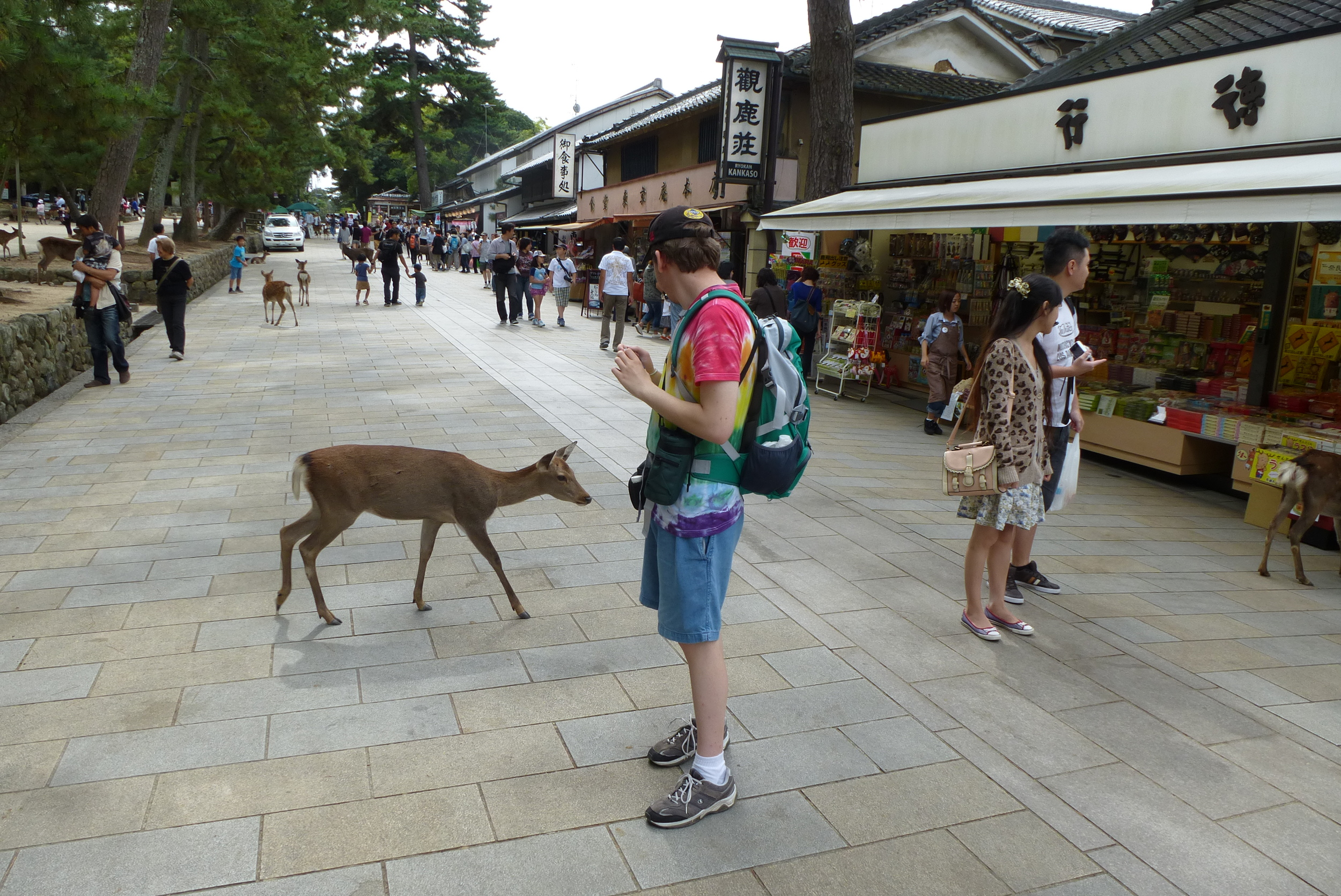 The deer were actually very polite