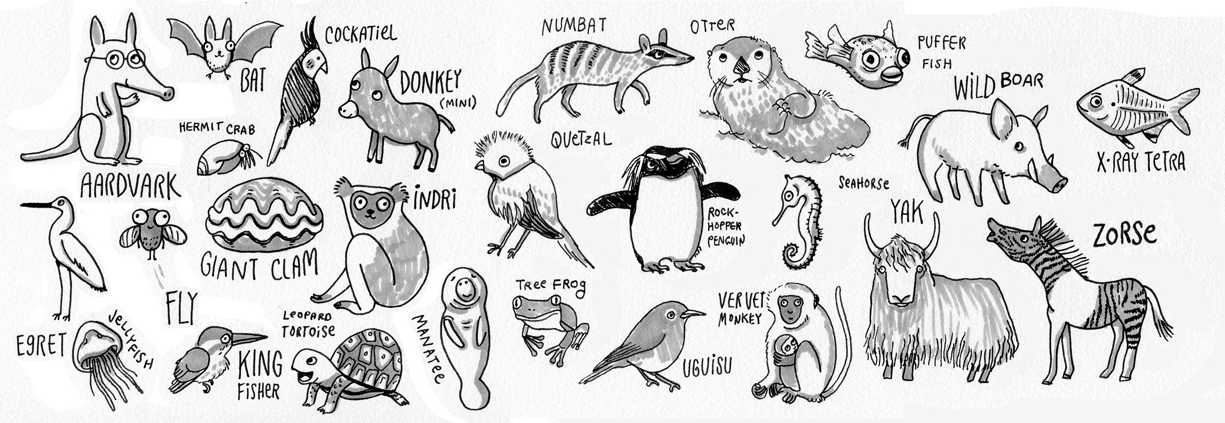 Odd Animals A to Z
