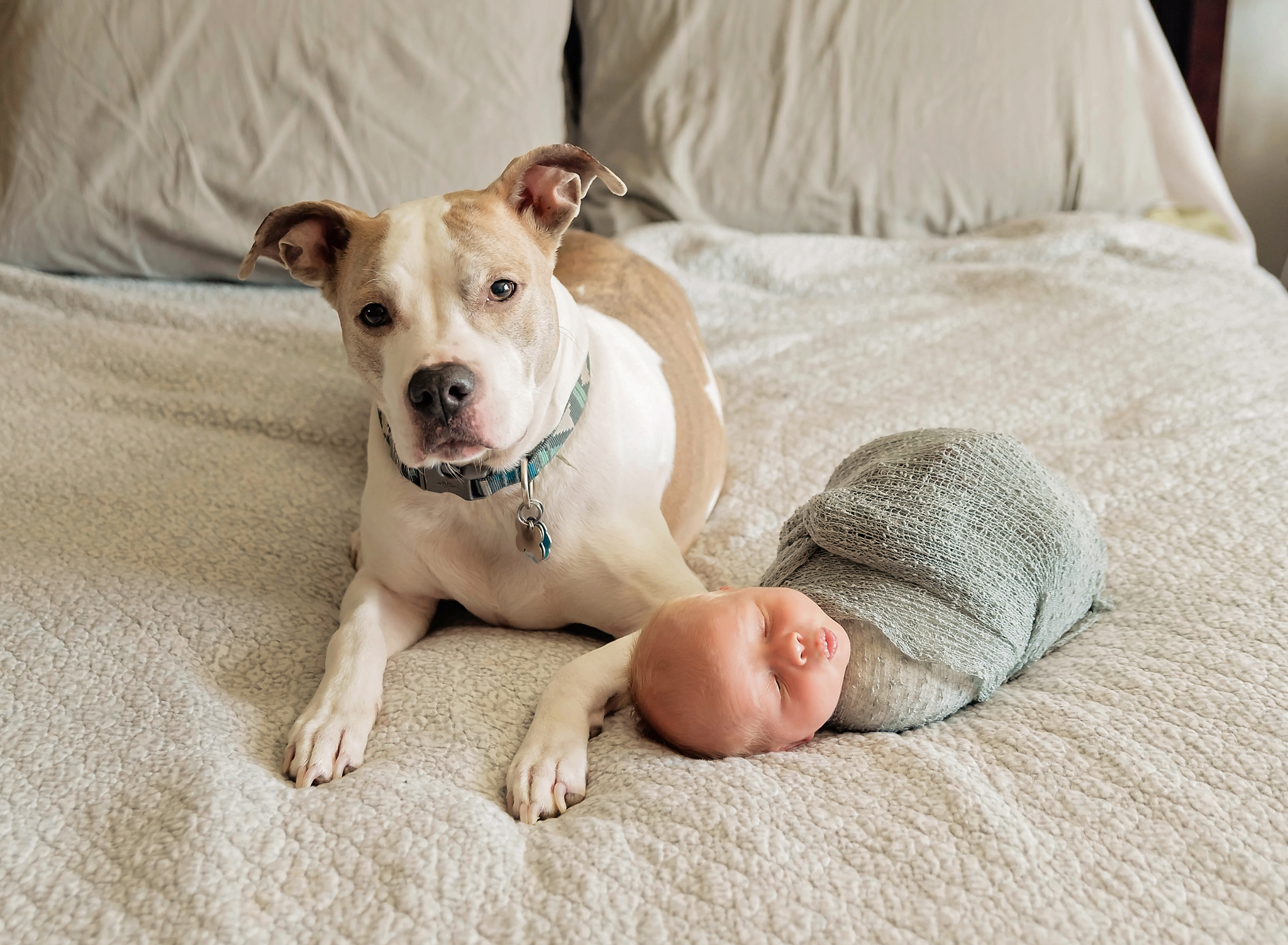 Newborn baby boy and his dog