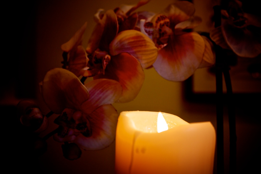 Orchid Light.jpg