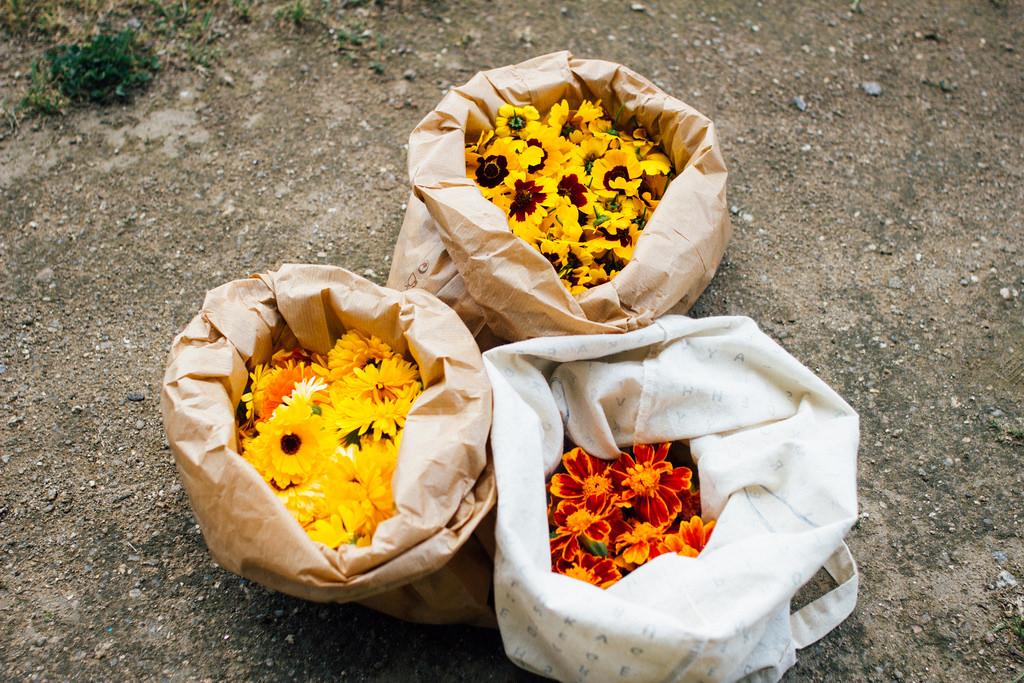 Estas plantas são muito generosas. Estão sempre a florir, por isso corto as flores e seco-as para usar mais tarde. /  These plants are very generous. They keep on giving, so I'll dry them for later use.