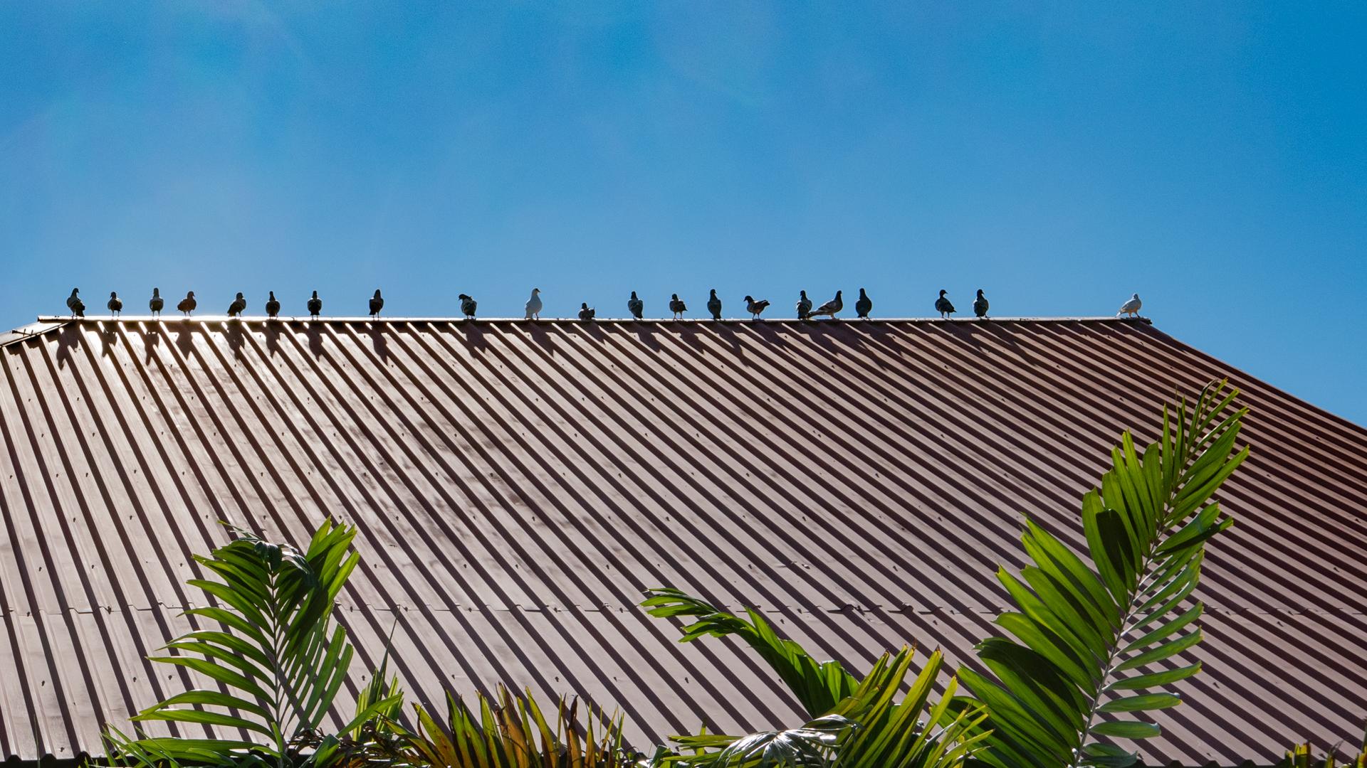 cabo-san-lucas-birds-rooftop.jpg