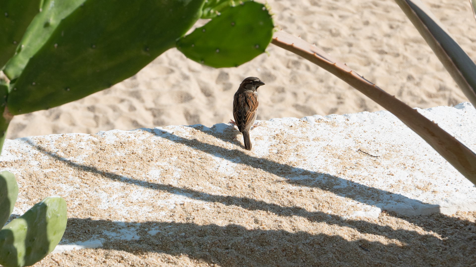 cabo-san-lucas-bird-beach.jpg
