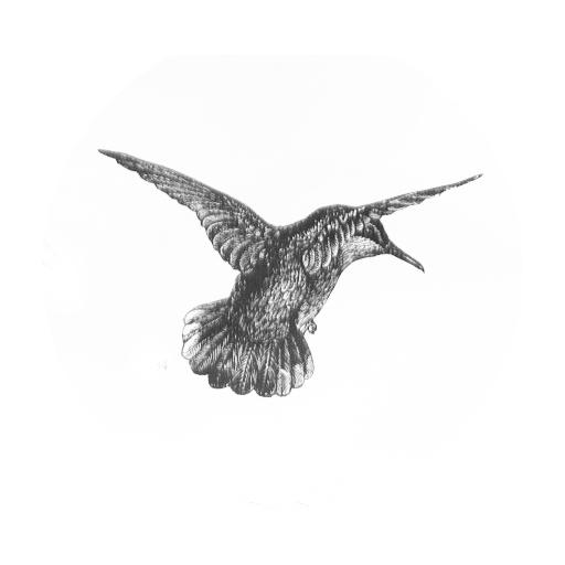 humminbird-square.jpg