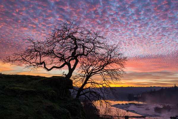 """Tree Silhouette and the Falls Under Pink Popcorn Clouds"" - Winter 2015"