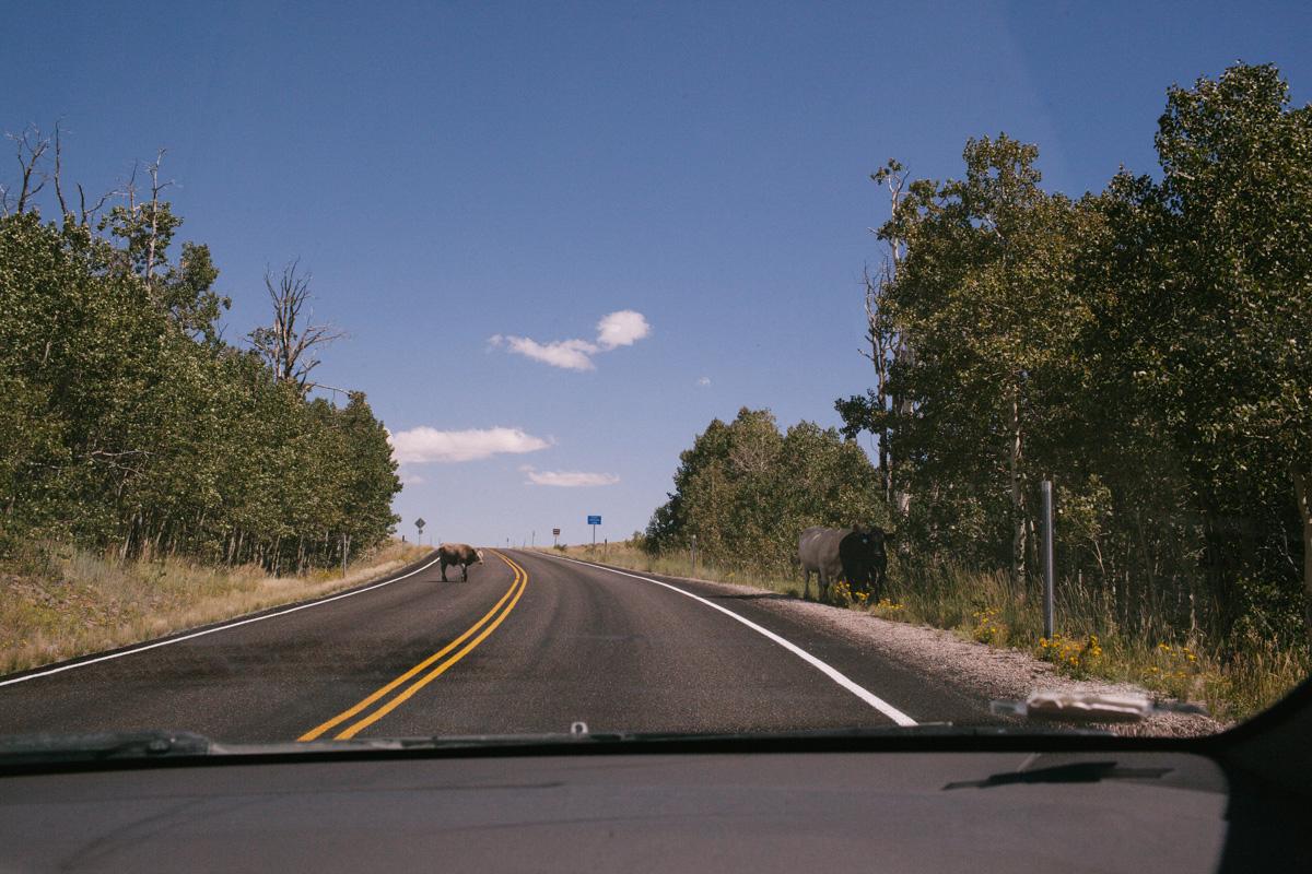 Road Trip 2014-7918.jpg