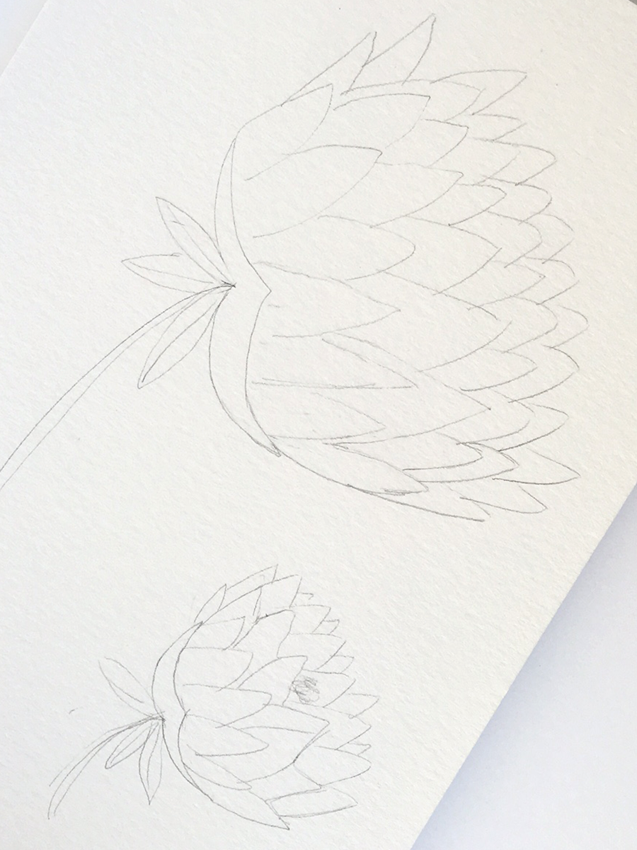 From Photo to Sketch to Watercolor Painting • Delighted Creative Co.