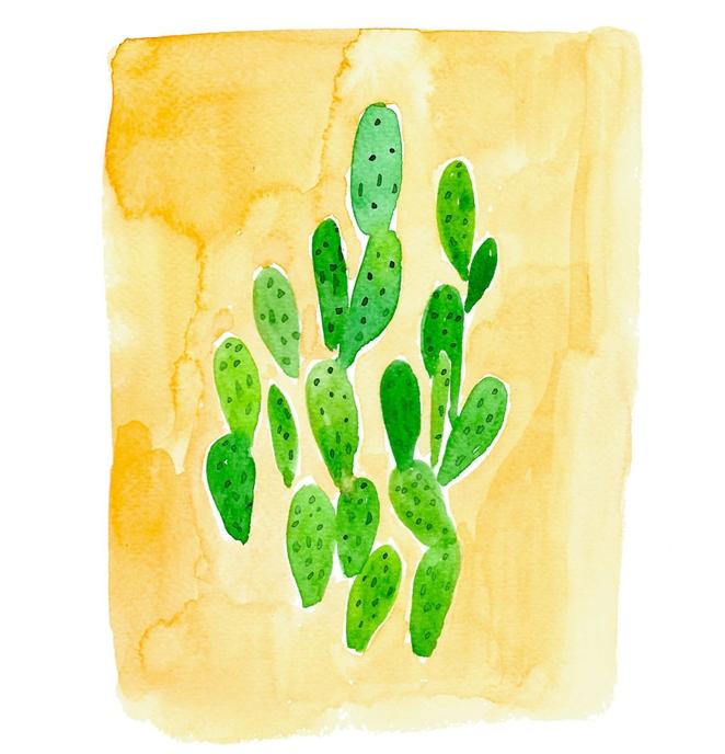Succulent Illustration ©Amanda Gomes • delightedco.com