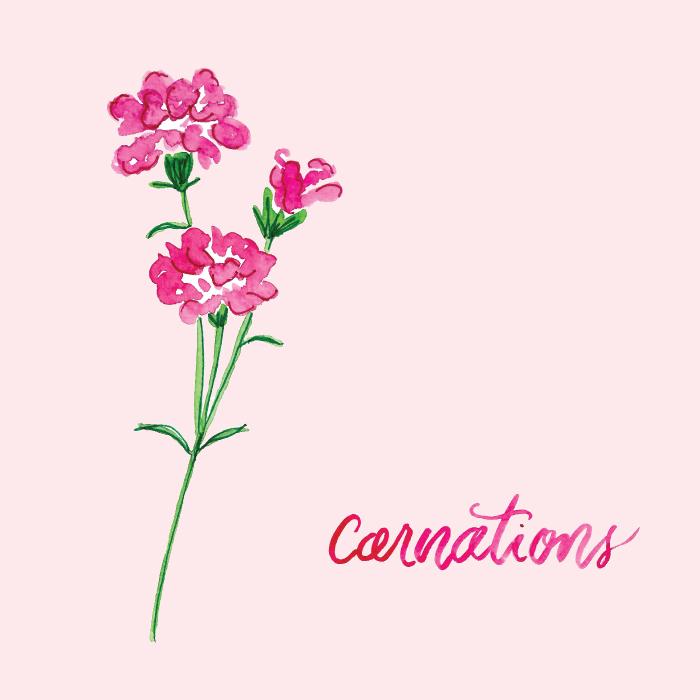 Watercolor Carnation Floral Illustration by Amanda Gomes • amandagomes.com