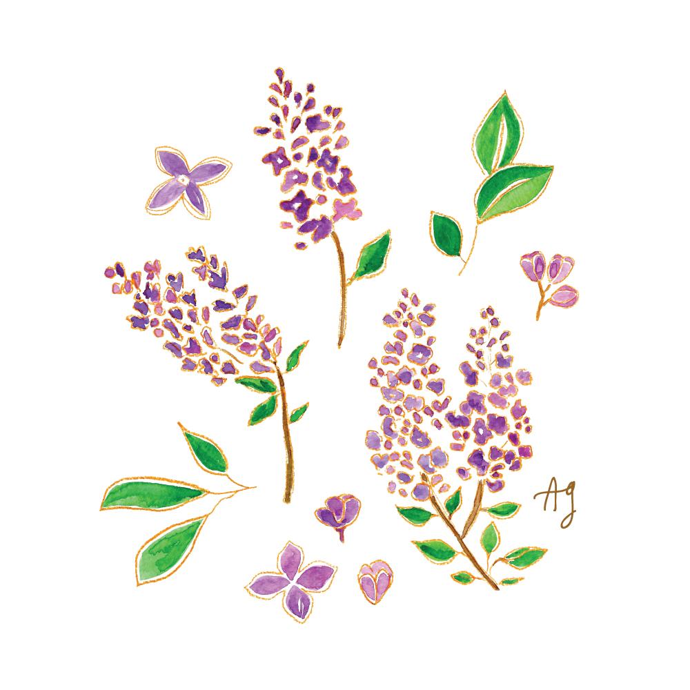 Amanda Gomes watercolor Lilac Illustration • amandagomes.com