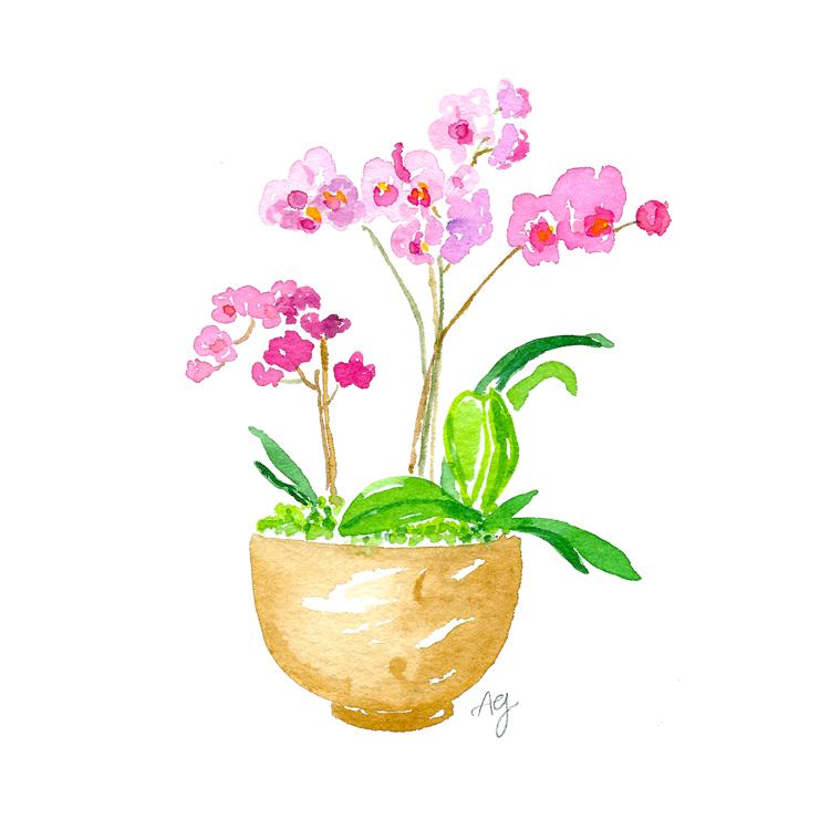 Amanda Gomes Watercolor Illustration Orchid Plant • amandagomes.com