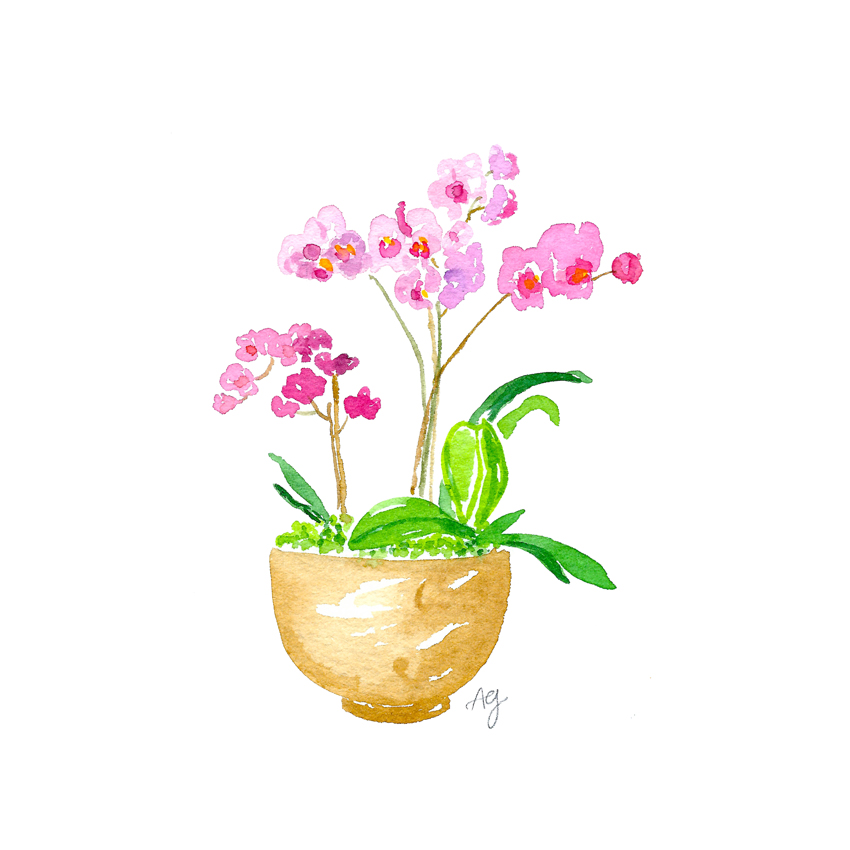 Watercolor Orchid Plant Illustration by artist Amanda Gomes • amandagomes.com