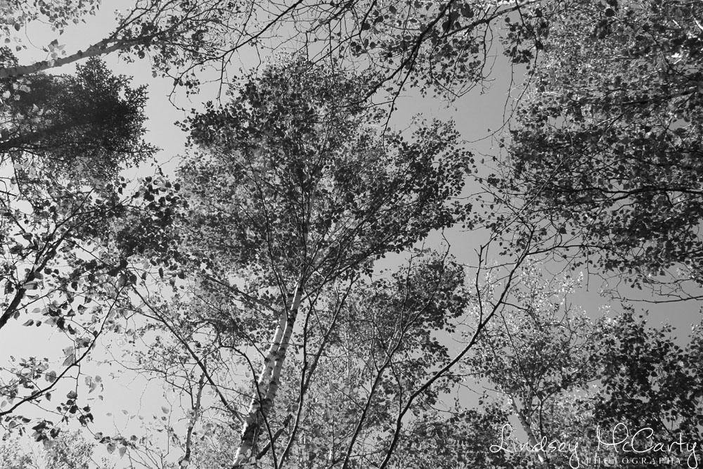 2014_Maine_psewl_1696.jpg