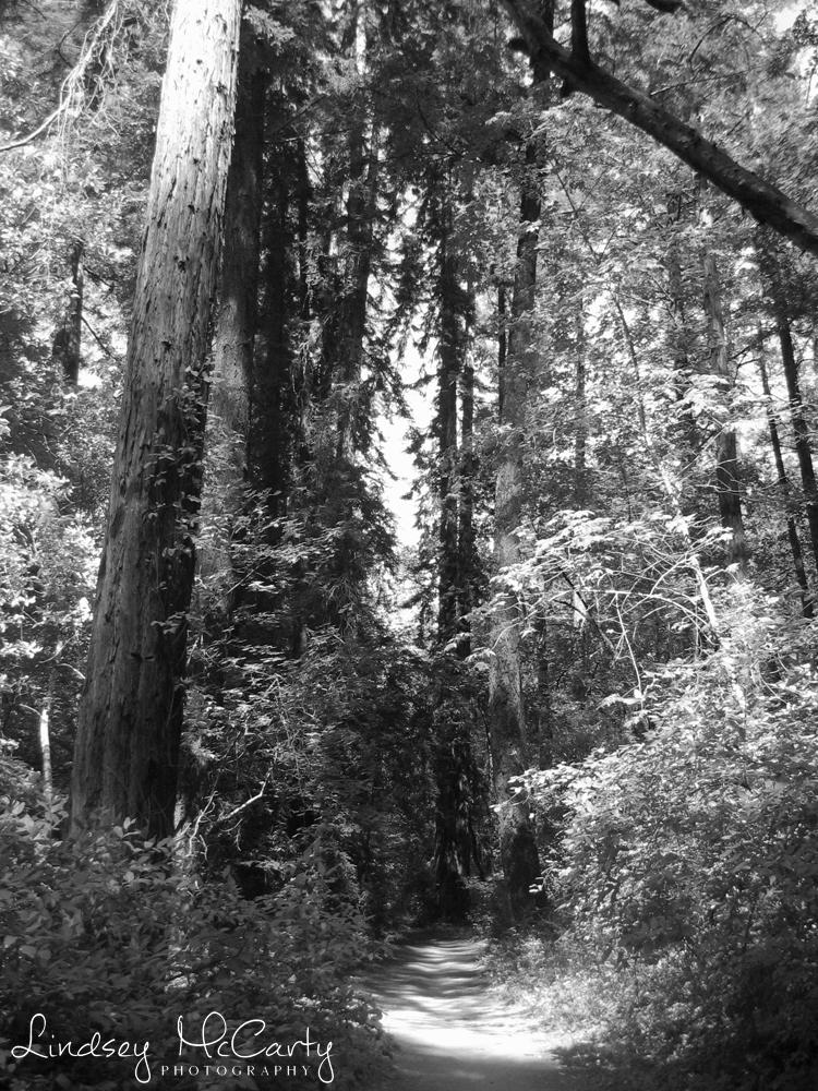 California_psewl_121_2177.jpg