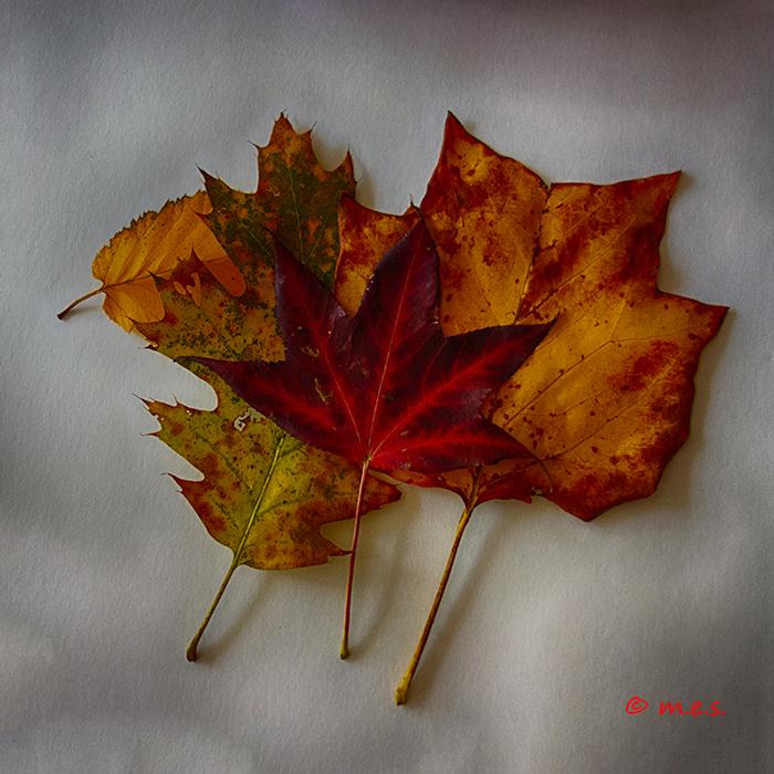 Autumn leaves HDR.jpg
