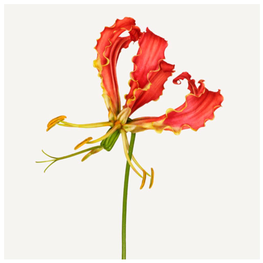 Andrew Zuckerman: Flower