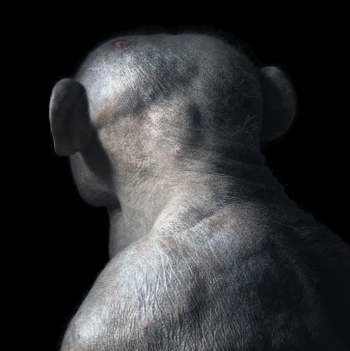 Tim Flach: Extraordinary Animals