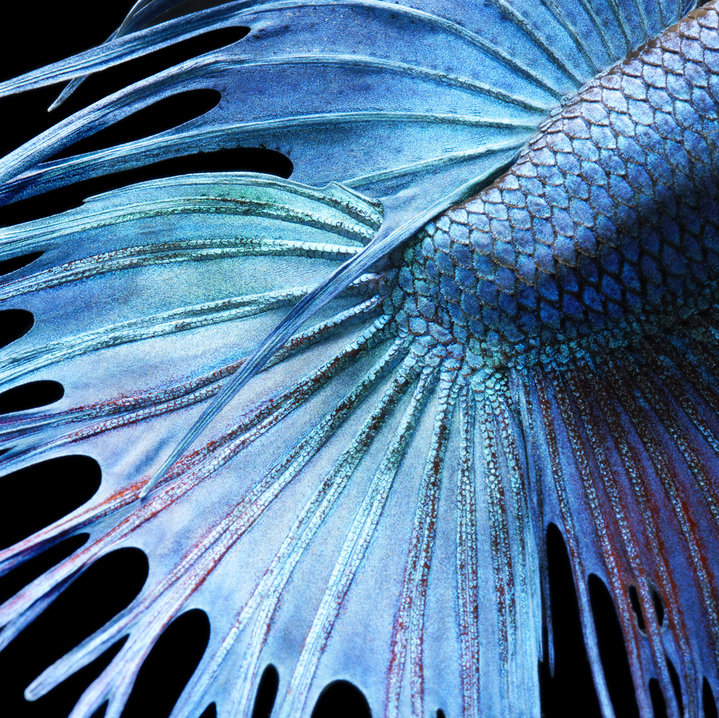 9 0139_Fighting_Fish_Abstrac.jpg