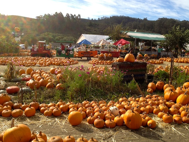 It's a glorious day for pumpkins, hay rides, pony rides, train rides, petting zoo and more.