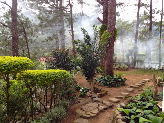 A beautiful spot for breakfast at our guest house, surrounded by pines and fog.