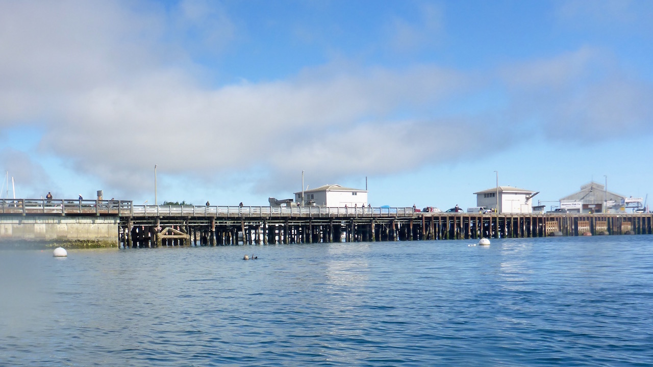not far from the shore and we already see sea lions