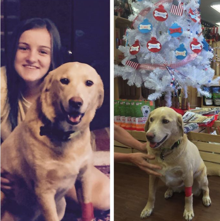 Cassie has quickly gone from being a foster dog to a forever family member. We couldn't be happier for this precious lab...