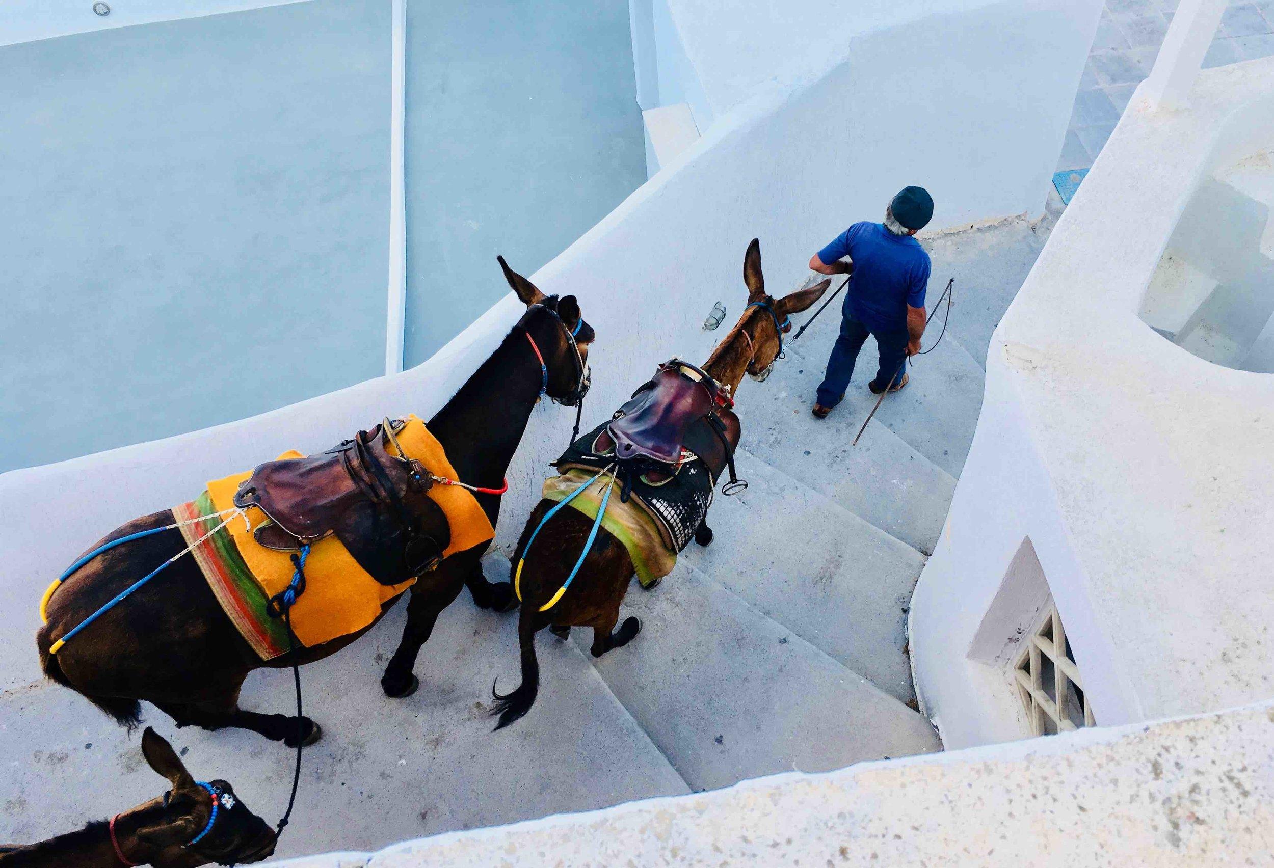 Donkeys on path in Fira