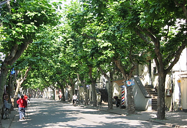 french concession street copy.jpg