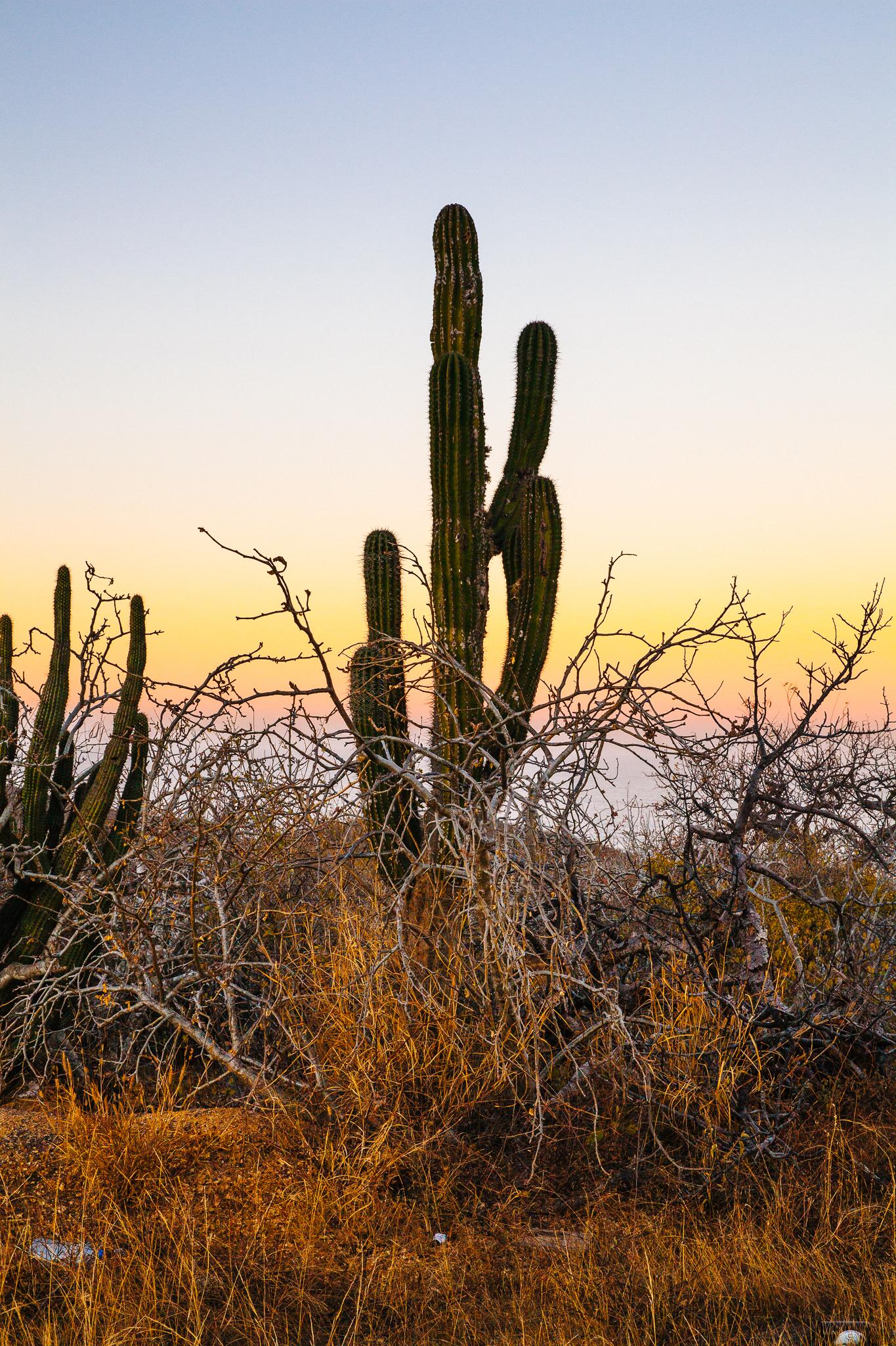 Helynn_Ospina_Travel_Mexico_Baja_Todos_Santos_0155023.jpg