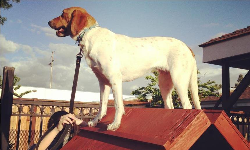 HAZEL PRIMAL CANINE DOG TRAINING.jpg