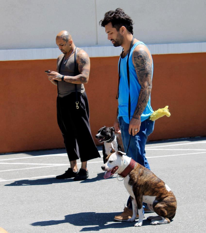 mike and arash primal canine dog training