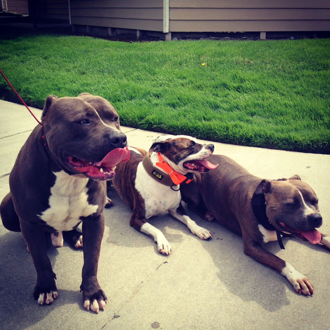 socialization dog training primal canine