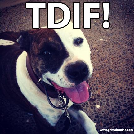 tdif primal canine dog training