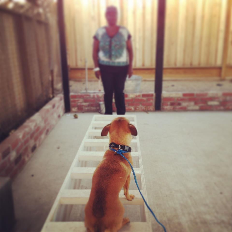 primal canine bay area dog training
