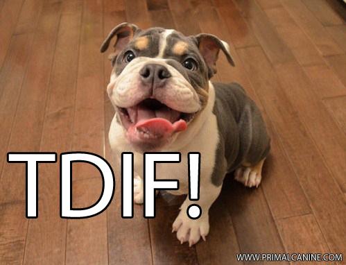 PRIMAL CANINE DOG TRAINING TDIF FUNNY DOG PICS