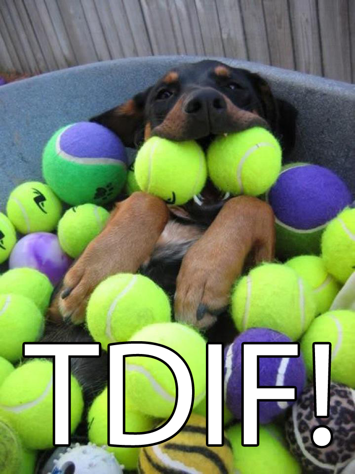 TDIF primal canine bay area dog training