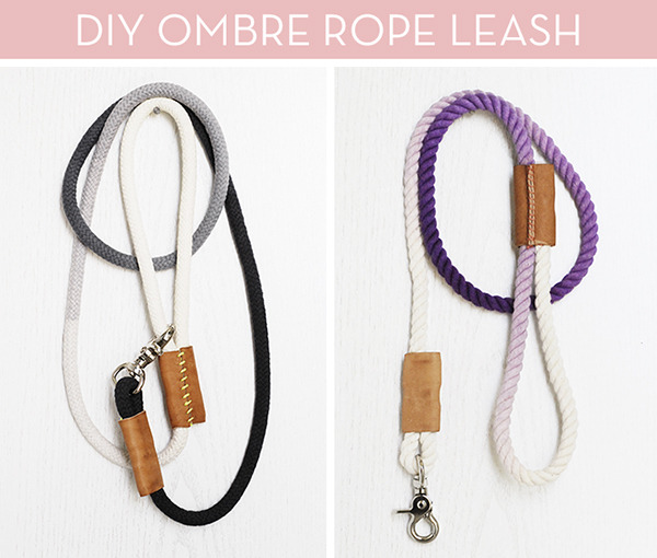 dyed rope leash bay area dog training primal canine