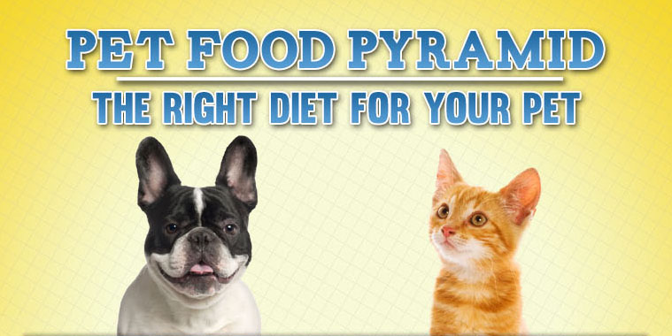 pet-food-pyramid- primal canine dog  san jose training