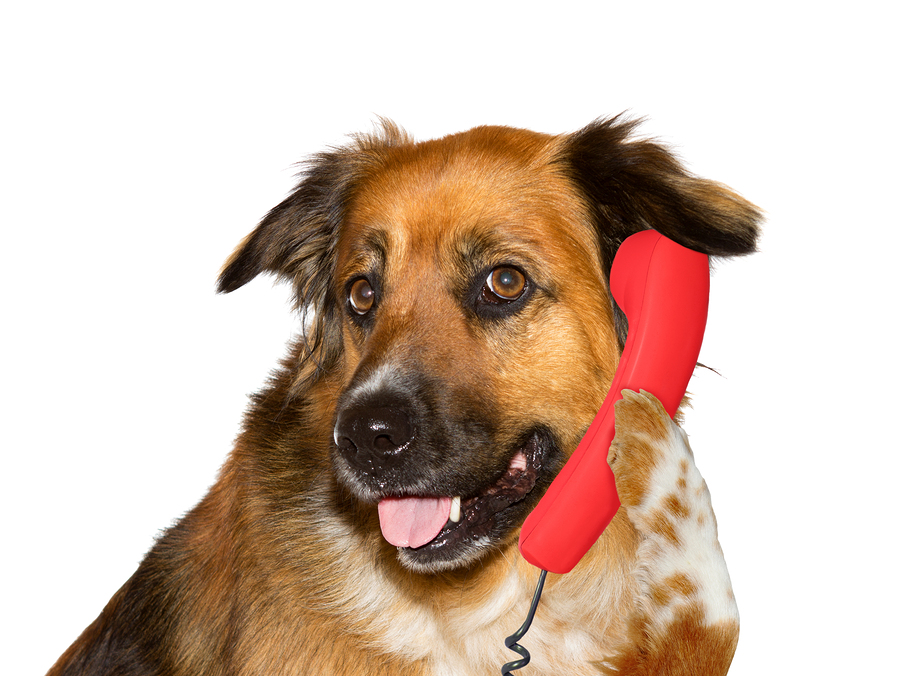 Dog is talking on telephone, on white background