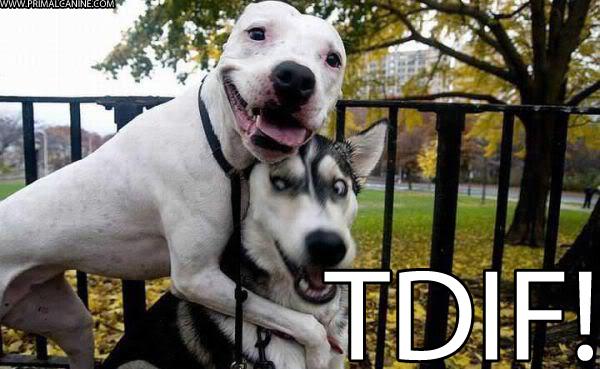 TDIF primal canine dog training bay area dog training