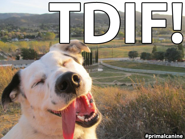 tdif primal canine bay area dog training