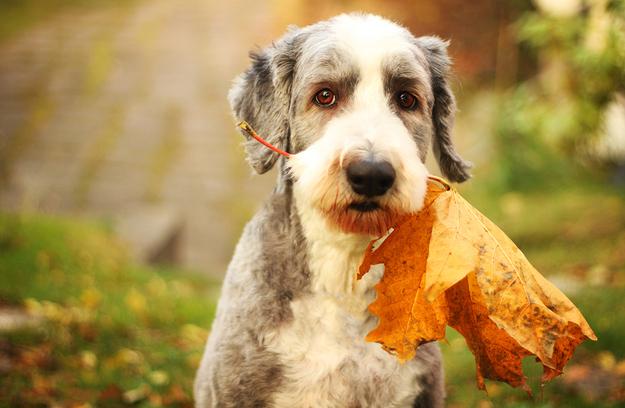 primal canine san jose dog training