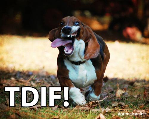 tidf primal canine bay area dog training
