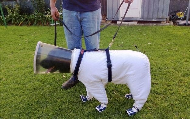 govt shutdown primal canine bay area dog training