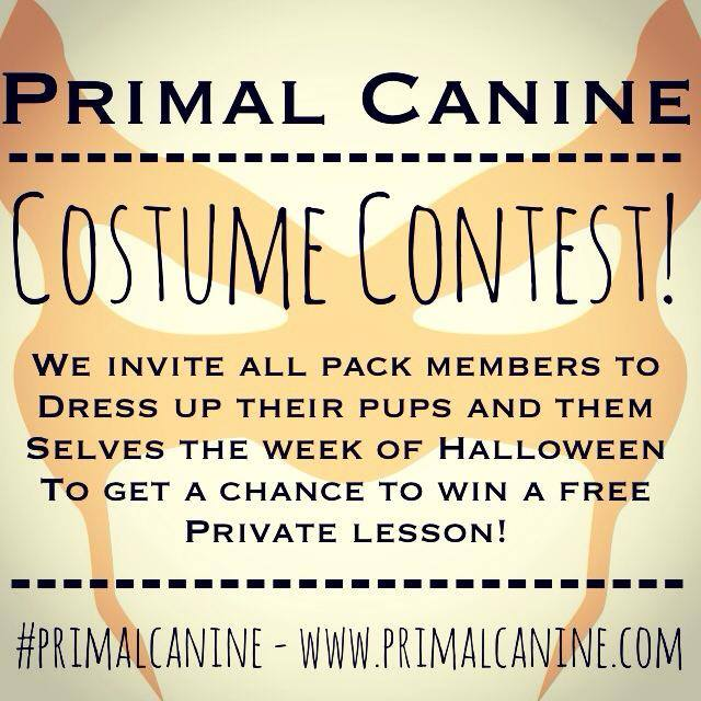 primal canine san jose dog training costume contest