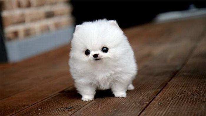 primal canine dog training puppy